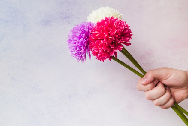 Close-up of hand holding colorful fake chrysanthemum flowers in hand