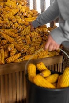 トウモロコシの穂軸を持っているクローズアップの手
