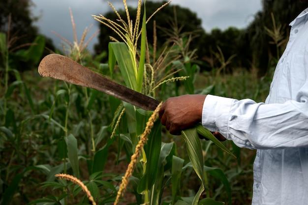 Primo piano che tiene la mano che tiene lo strumento agricolo