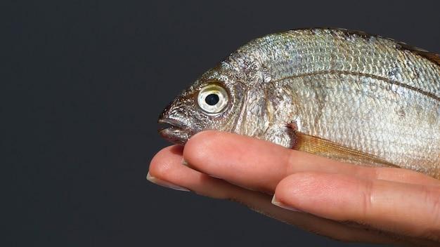 근접 손을 잡고 아가미와 물고기