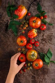 Крупным планом рука свежий помидор