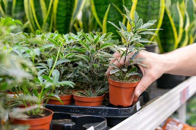 Рука крупным планом держит комнатное растение