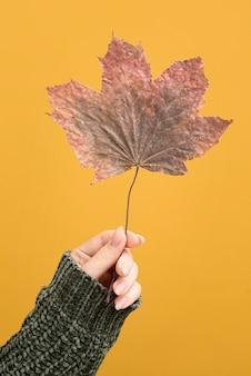 Close-up hand holding leaf