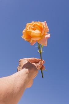 Макро рука держит оранжевую розу