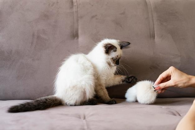 Крупным планом рука держит игрушку для домашних животных