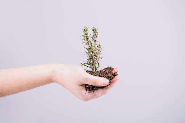 Close-up of hand holding seedling over white background