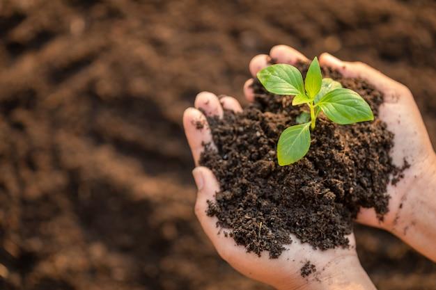 若い緑の木の芽を押しながら土に植える手を閉じる