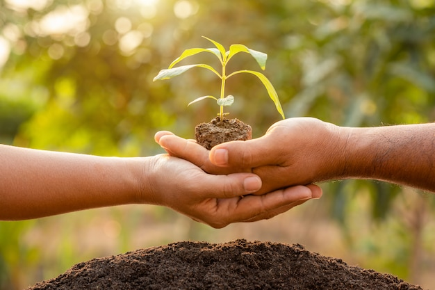 Close up hand holding young green tree sprout and planting in soil