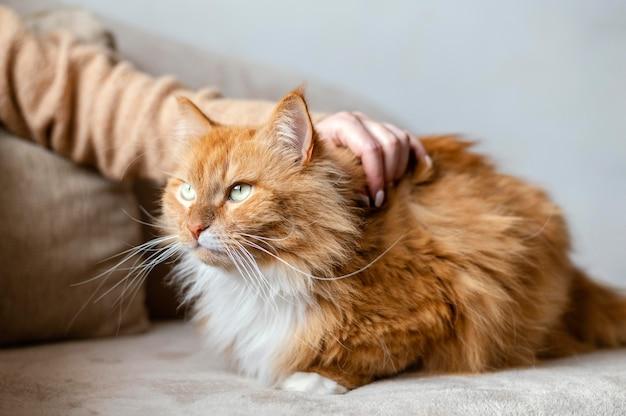 猫をかわいがる手をクローズアップ