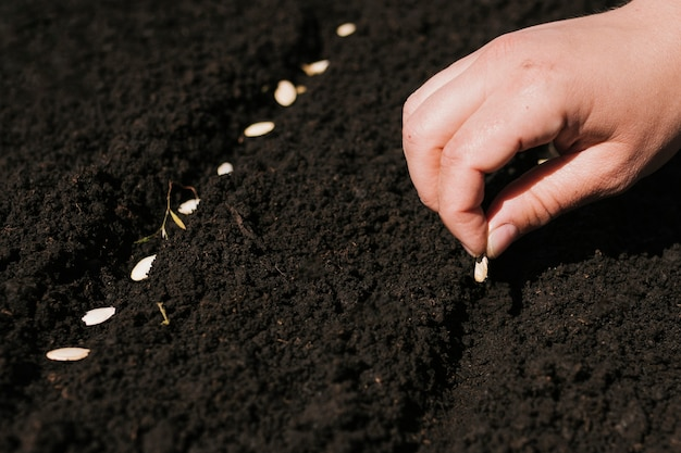 Close up hand planting seeds