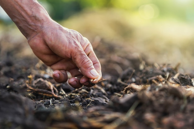 Close up hand planting tomato in garden