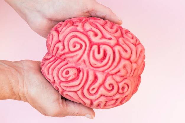 Close-up of hand showing human brain model against pink background