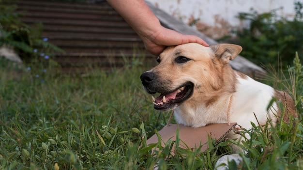 Крупным планом рука трогает голову собаки