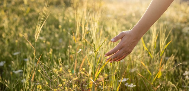 植物に触れる手をクローズアップ