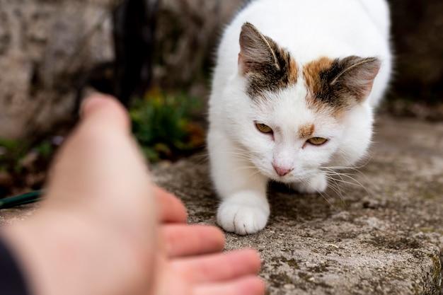 Крупным планом рука пытается коснуться кошки