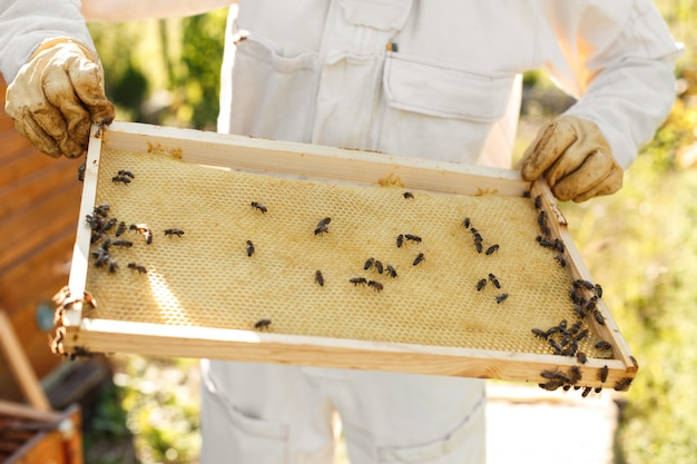 Close up hands of beekeeper hold wooden frame with honeycomb