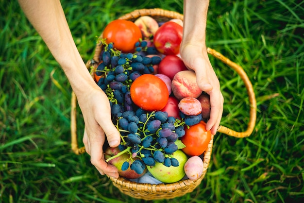 Close up hands collect fresh tomato and grapes with peaches in basket on the grass