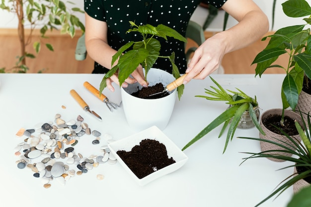 Close-up hands gardening indoors