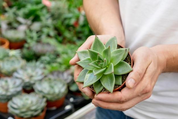 Руки крупного плана держа элегантное домашнее растение