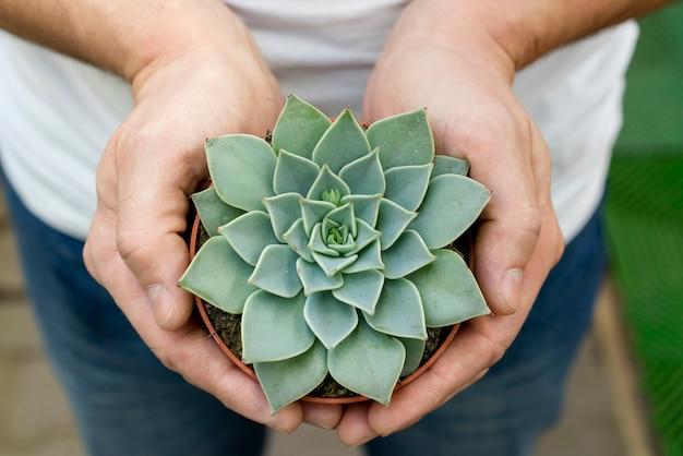 Close-up hands holding elegant plant