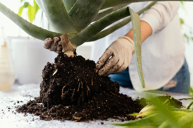 Close-up hands holding plant and soil