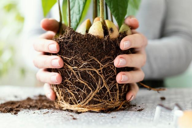 흙과 식물을 들고 근접 손