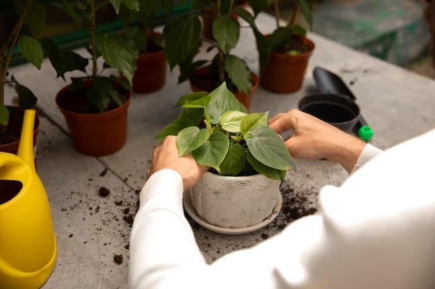 Закройте руки, заботясь о растении