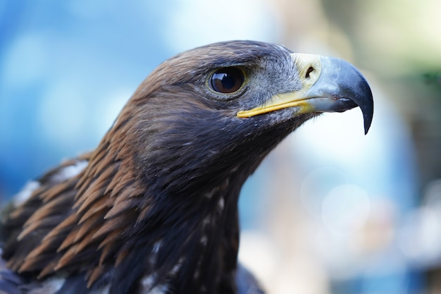 Close up of the head of a bird of prey. high quality photo