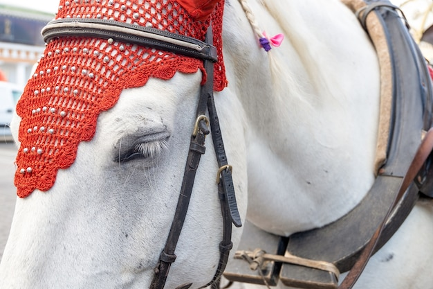Close-up of the head of a white horse in an elegant harness.