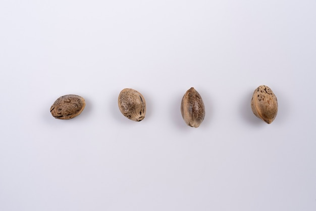 Close up of hemp seeds arranged in a straight line isolated on white background close up hemp seeds