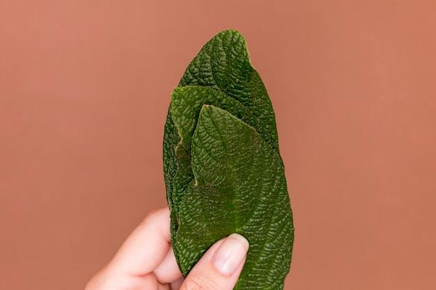 Close-up holding green leaf on pink background