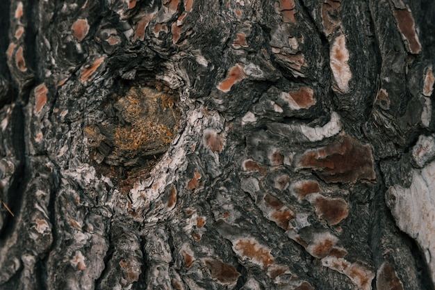 Close-up of hole in the bark of a tree
