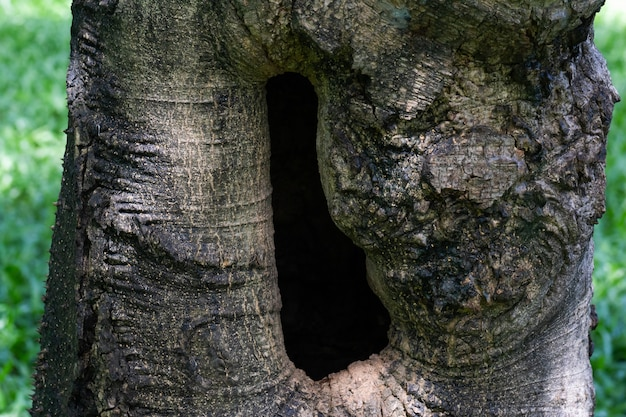 Close up hole in gnarl of the tree.