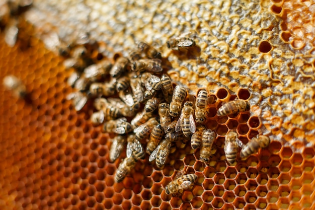 Close up honeycomb in wooden frame with bees on it