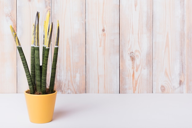 Close-up of houseplant in yellow pot on white desk against wooden wall