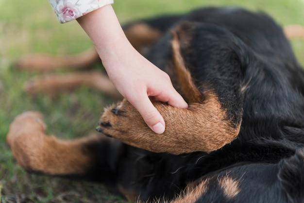 Primo piano di una zampa del cane della holding della mano umana
