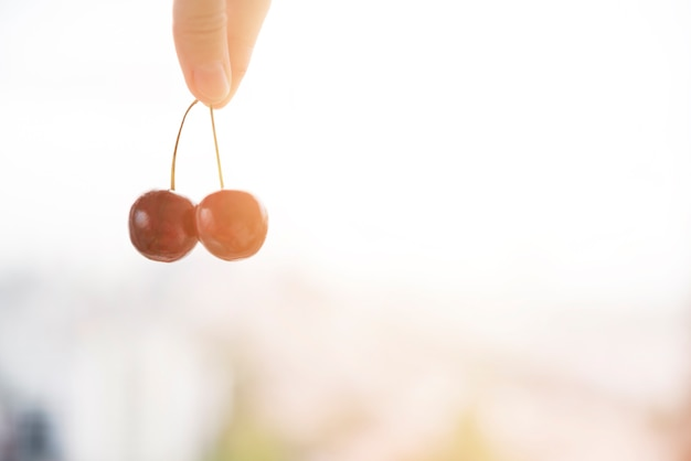 Close-up of human's finger holding red cherries twig against blurred backdrop