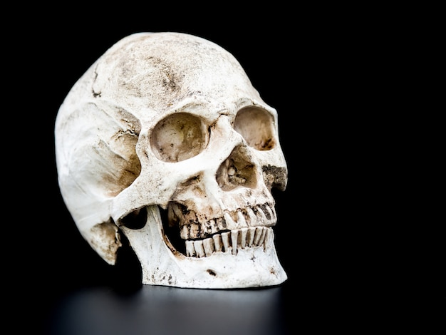 Close up human skull on the black background