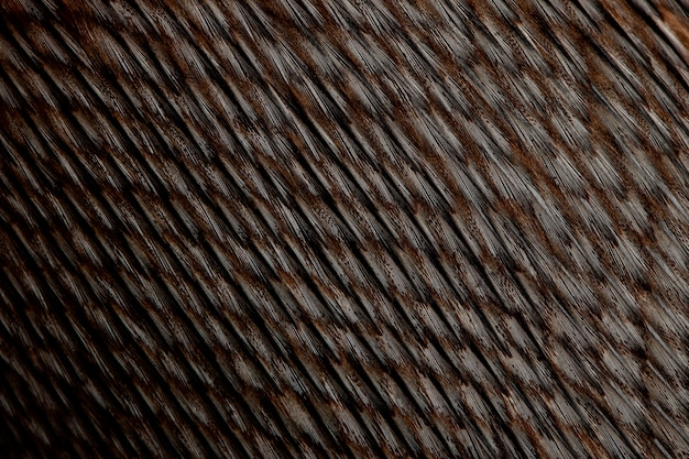 Close-up of humboldt penguin feathers, spheniscus humboldti
