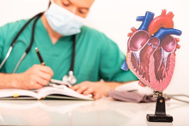 Close-up image of anatomical heart with background of cardiologist working, background out of focus and focus on heart image.