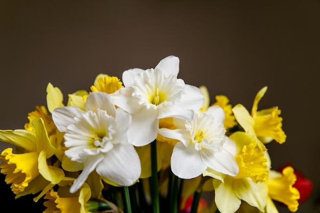 Крупным планом изображение букет из белых и желтых нарциссов весенних цветов