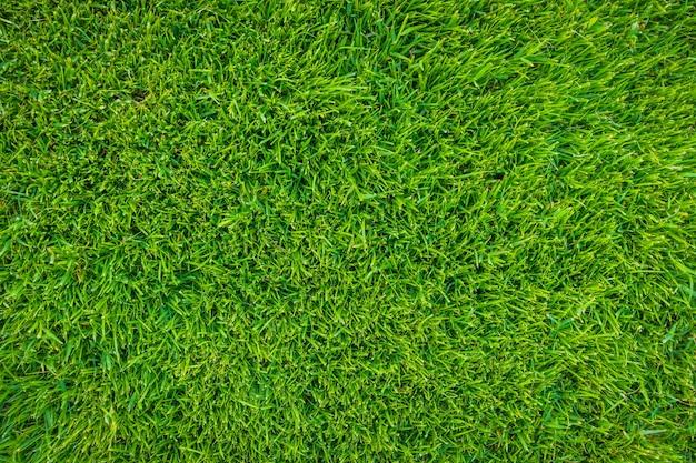 Close-up immagine di erba fresca di sorgente verde.