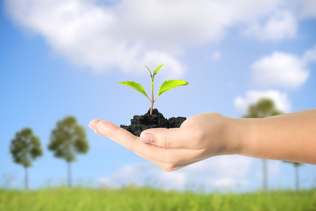 Close up image of human hands holding sprout with blue sky background