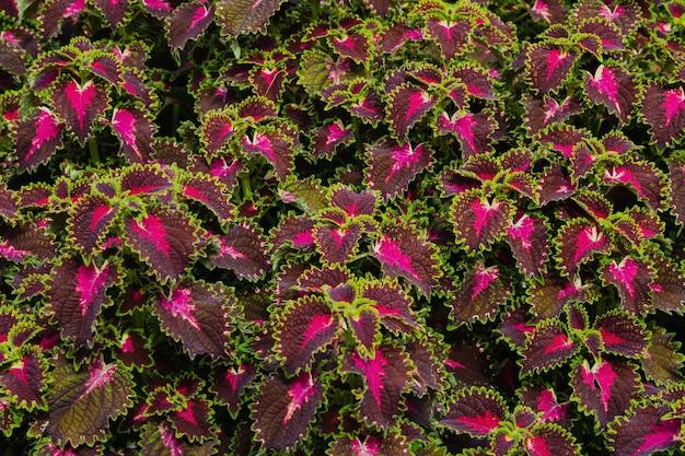 素晴らしい色の美しい花の壁のクローズアップ画像。