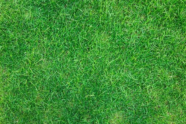 Крупным планом образ свежей весенней зеленой травы