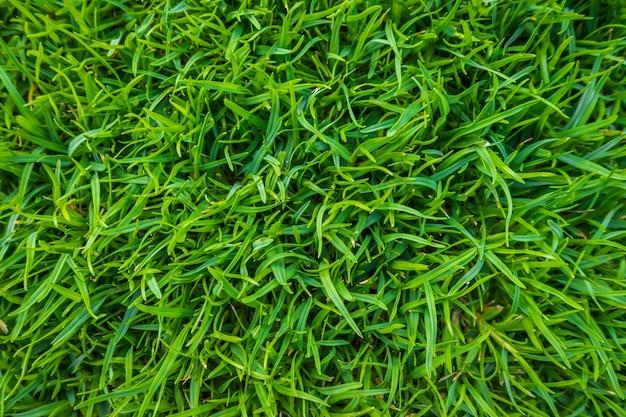 Крупным планом образ свежей весенней зеленой травы.