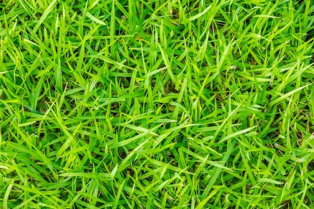 Крупным планом изображение свежей весенней зеленой травы.