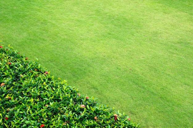 신선한 봄 녹색 잔디의 클로즈업 이미지