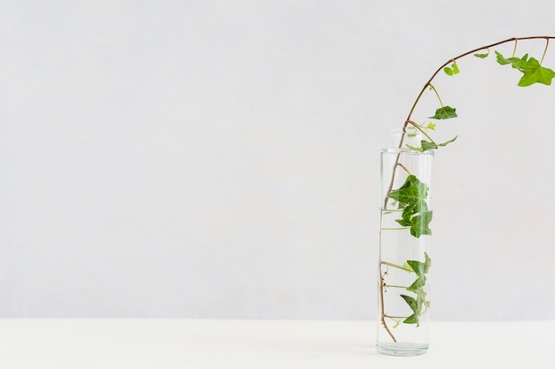 Close-up of ivy in transparent glass bottle on white desk against background