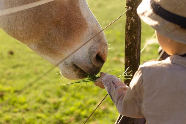 Close up kid petting horse